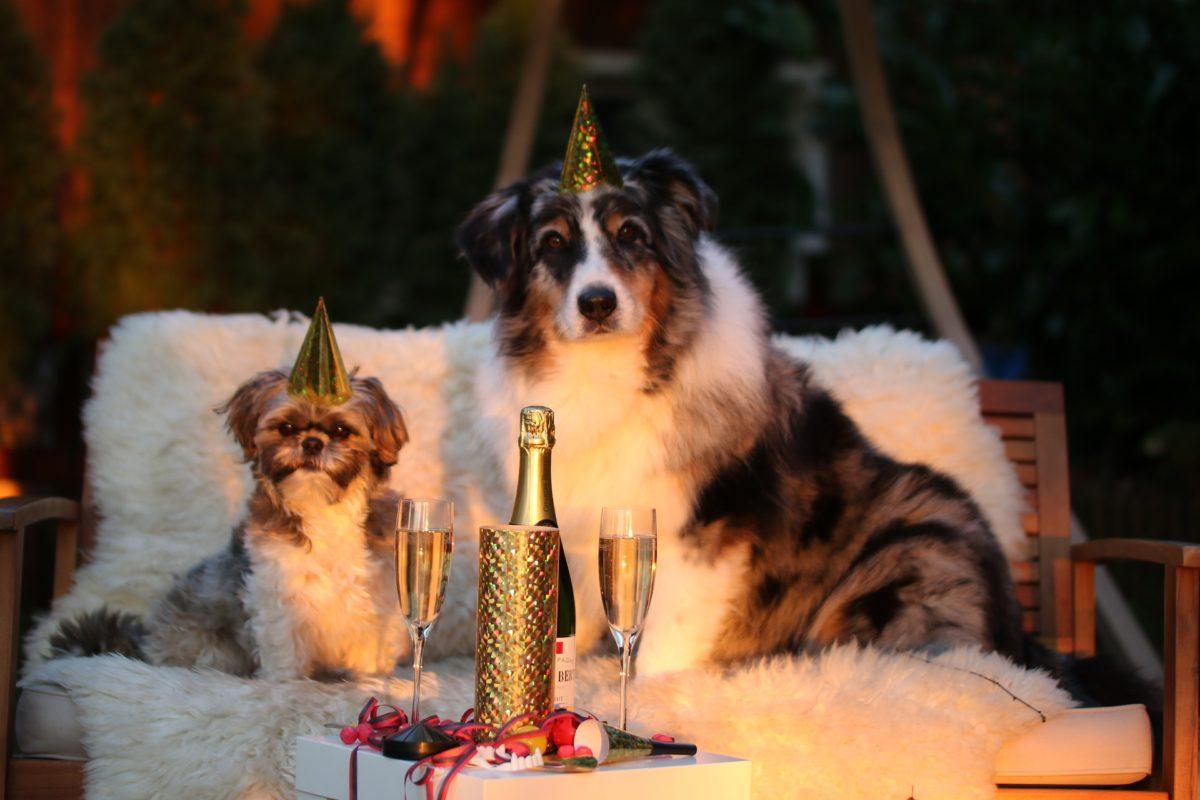 Nouvel-an-chien-1-1200x800.jpg
