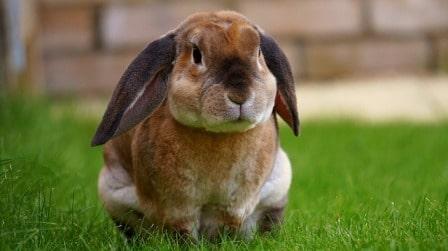 conseils_lapins_sites_veterinaires_06.jpg