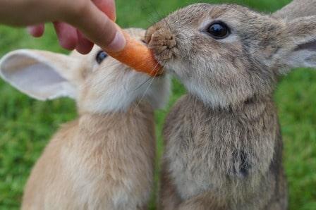 conseils_lapins_sites_veterinaires_11.jpg