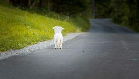 conseils_chiens_sites_veterinaires_04.jpg