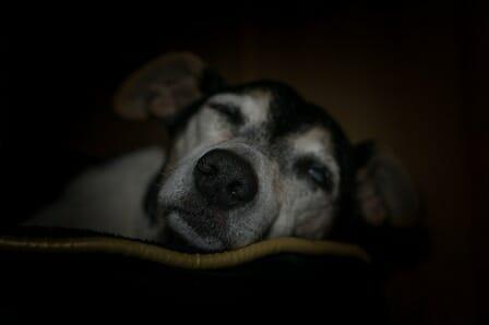 conseils_chiens_sites_veterinaires_09.jpg