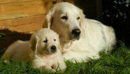 conseils_chiens_sites_veterinaires_12.jpg
