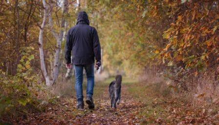 conseils_chiens_sites_veterinaires_26.jpg