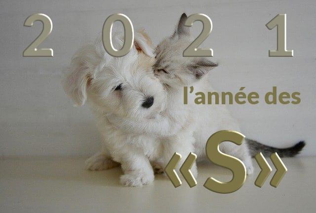 Annee-des-S-2.jpg